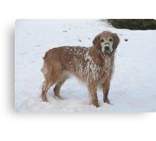 Snowy Winnie Dog Canvas Print