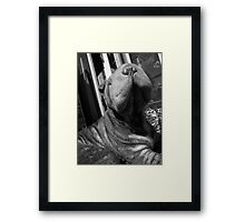 Sniffed Framed Print
