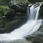 upstream of the buderim waterfall by sharpbokeh