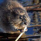 Breakfast Time on the Marsh by bozette