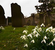 Castelton Snowdrops by picturistic