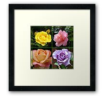 Roses Collage in Mirrored Frame Framed Print