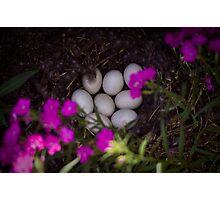 Matt Claghorn's 'Garden of light' Photographic Print