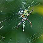 A Spider Weaves Its Web by Laurie Minor