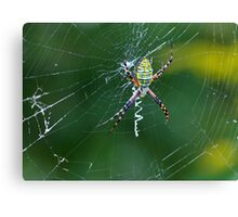 A Spider Weaves Its Web Canvas Print