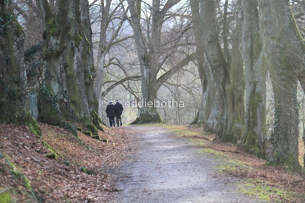 Heckingen tree lane by eddiebotha
