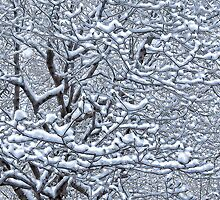 Snow Tree by Marilyn Cornwell