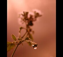 Wild Droplet  by HamimCHOWDHURY