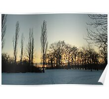 sunset conifers Poster