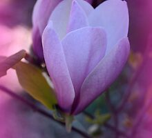 Whispers Of Violet by kkphoto1