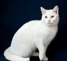 Pretty Kitty! by Johanne Brunet