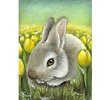 Spring Bunny Photographic Print