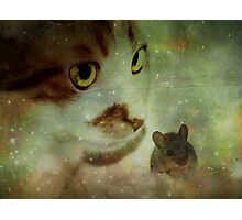 Cat and mouse games... Photographic Print