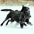 Racing in the snow by Alan Mattison IPA
