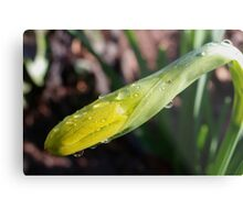 Oy Vey! So, When Will I Be A Daffy ?? Metal Print