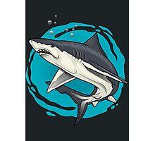 small shark  Photographic Print