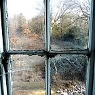 Window on the world ~ Pool Park Asylum by Josephine Pugh