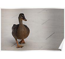 Duck! Poster