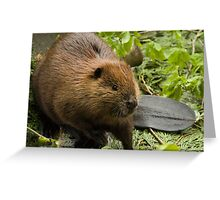 Beaver Tale Greeting Card