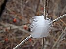White Feather in Brambles by MotherNature