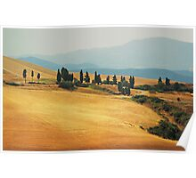 Cypress Trees In Italy Poster