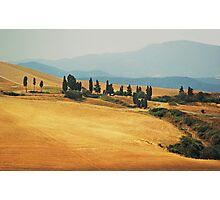 Cypress Trees In Italy Photographic Print
