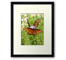 Butterfly ~ Trio of Queens Framed Print