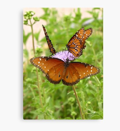 Butterfly ~ Trio of Queens Canvas Print