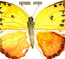 Phoebis philea (Orange Barred Sulphur) by Carol Kroll