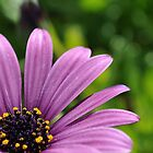 The Purple by Cleber Photography Design