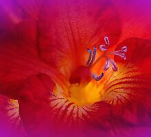 Red Freesia (Iridaceae) by MotherNature