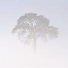 Lonely Pine in Blizzard by Kasia Nowak