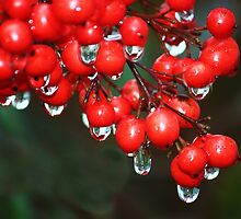 after the rain berries by ANNABEL   S. ALENTON