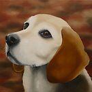 Beagle Nicky by Koekelijn