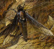 Moth Wings by BoB Davis