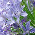 Blue Flowers by Sarah Fenn