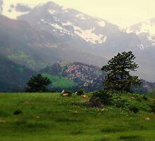 Colorado Dreaming by NatureGreeting Cards ©ccwri