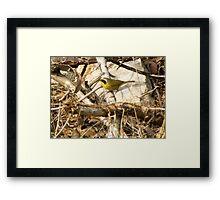 Common Yellowthroat ~ Male Framed Print