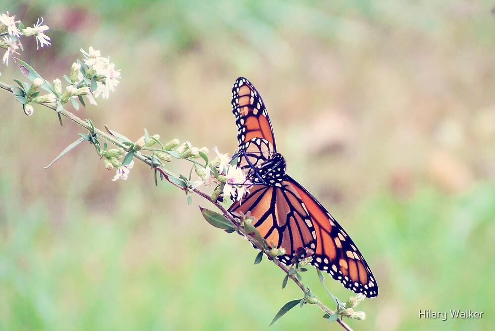 Monarch by Hilary Walker
