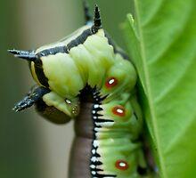 Bee Hawk Caterpillar by KellieJayne