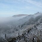 Freezing fog in Clydach Gorge by Jane Corey