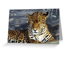 Leopard Close up Greeting Card