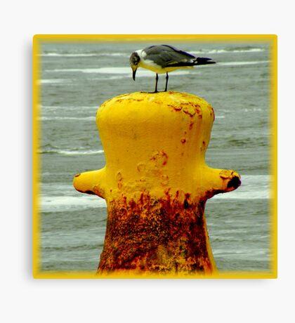 Avian Solitude Canvas Print