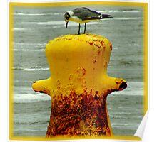 Avian Solitude Poster