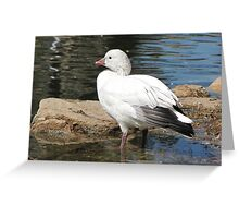 Snow Goose ~ Migrant Greeting Card