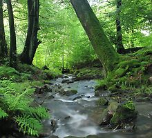 Woodland stream in summer by Jane Corey