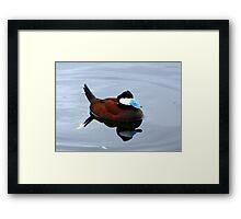 Ruddy Duck ~ Male Framed Print