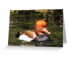 Red-crested Pochard ~ Male Greeting Card