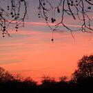 hyde park winter sunset by eddiebotha