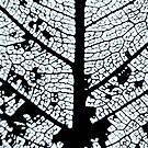 Skeleton leaf by Livvy Young